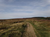 The path across Scarth Wood Moor.