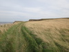 The path leading up to Lebberston Cliff.